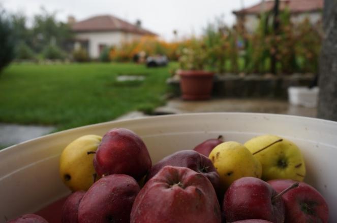 Ябълки от градината